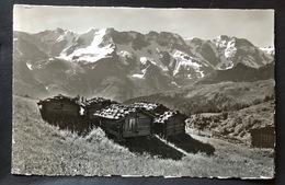 Mürren Sommerlandschaft Alphütten/ Photo Gyger Adelboden - BE Berne