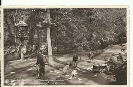 CP.Bruxelles-Schaerbeek (ex-Collection DELOOSE) - Parc Josaphat - Le Colombier   - W0033 - Schaerbeek - Schaarbeek