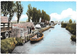 Cpsm..Saint-Omer..(Pas-de-Calais)..le Chargement Des Choux-fleurs..quai Des Paturette..animée..1966..camion,simca - Saint Omer