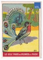 Image Fable Jean De La Fontaine Imp. Landouzy Frères Lambersart Le Geai Paré Des Plumes Du Paon Jay Peacock Bird A31-99 - Autres