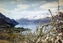 Norway - Ullensvang Hardanger - Formato Grande Viaggiata – E 14 - Norvegia