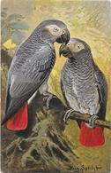 AUGUSTE SPECHT Carte Illustrée Perroquets - Oiseaux