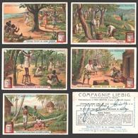 Liebig - Vintage Chromos - Series Of 6 / Série Complète - Arbres Fruitiers - En Français - Liebig