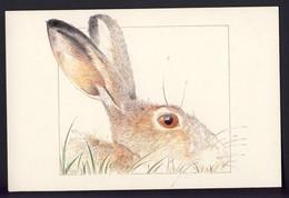 Rabbit - Animals