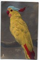OISEAU *PERROQUET  * HUPPE * Particularité OEIL DE VERRE * Carte N° 953/3 Colorisée - Vogels