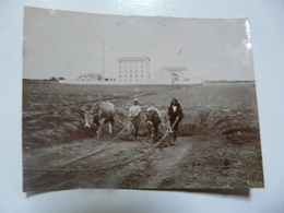 PHOTO ANCIENNE - TUNISIE : Tunis - Scènes Agricoles - Africa