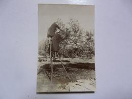 PHOTO ANCIENNE - TUNISIE : Gabès - Cueillette Des Olives (scène Animée) - Afrika