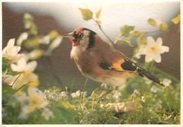 Animaux - Oiseaux - A Définir - Fleurs - Voir Scans Recto-Verso - Birds