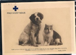 Chat Et  Chien- Cat And Dog  -poes Hond -katze Hund - Katten