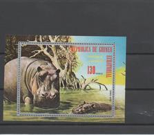 Hippopotame - Guinée Equatoriale