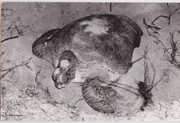 Kuantan Malaysia Turtle Photo Postcard Tortue Malaisie Affranchissement Timbre - Schildpadden