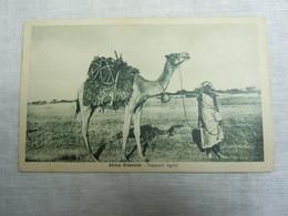 CPA-KP-PC- SOMALIA SOMALIE  - COLONIA ITALIANA -- TRASPORTI TIGRINI - Somalië