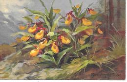 D. Derendinger-Roux - Flowers, Blumen, Fleurs, Frauenschuh - Autres Illustrateurs