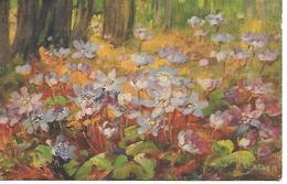Illustrator - A. Haller -  Blumen, Flowers, Des Fleurs, Floreale - Haller, A.