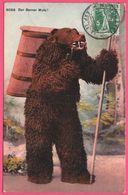 Litho - Der Berner Mutz ! - Ours Avec Pipe - Anthropomorphisme - Vendange - Edit. PHOTOTYPIE Co - 1911 - Bears