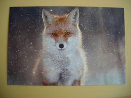 CPM Renard, Hiver, Winter Portrait Of A Fox - Dieren