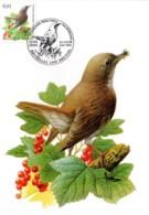 Lote MC0065 - Luscinia Megarhyncho - 1985-.. Birds (Buzin)