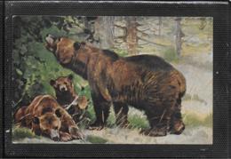 AK 0397  Braunbären - Künstlerkarte Von 1910-20 - Bären