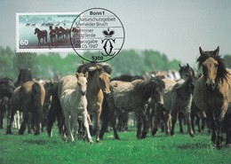Germany Maximum Card 1987: Nature Portection; Naturschutz; Melfelder Bruch; Wild Horses; Wildpferde - Umweltschutz Und Klima