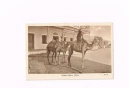 Camel Riders,Aden. - Yemen