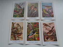 Beau Lot De 10 Cartes Postales Oiseaux  Oiseau  Illustrateur H.Dupond     Mooi Lot Van 10 Postkaarten Van Vogels  Vogel - 5 - 99 Postkaarten