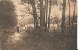 Kalmthout  - Heide - Une Lisière à Calmpthout  1909 - Kalmthout