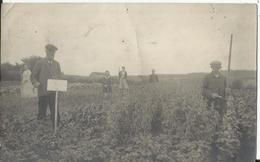 Tubize - Carte-photo - Panorama Champêtre 1920 (envoyée à Bousval) - Tubize