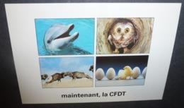 Carte Postale - Maintenant, La CFDT (dauphin, Chouette, Mouflons, Poussin) Syndicalisme - Syndicats