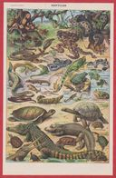 Reptiles. Reptile. Serpent Tortue ... Illustration Millot, Recto. Illustration Dessertenne, Verso. Larousse 1931. - Documenti Storici