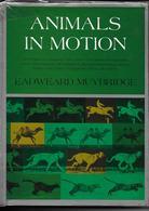 Animals In Motion - Eadweard Muybridge - Pré Cinéma - Dover Publications 1957 - Livres, BD, Revues