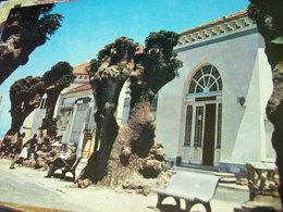 ALGEERIA CHERCHELL MUSEE  N1980 HI3184 - Altre Città