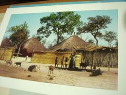 SENEGAL Concession En Brousse .animée - Chèvres , Goats CAPRE  N2004 HI3223 - Senegal
