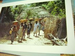 SENEGAL RETOUR DES RIZIERES N2004 HI3224 - Senegal