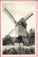Kasterlee - Oude Standaard Molen - 1955 - Kasterlee