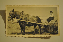 Metier Agriculture Attelage Cheval Labourage - Beroepen