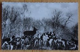 44 : Entre Plesse Et Blain - Forêt Du Gavre - La Chasse à Courre - Le Cerf Aux Abois - Meute De Chiens - (n°16837) - Francia