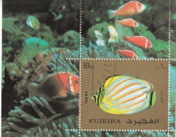 Fujeira 1972 Bf. 141A Pesci Exotic Fisch Marine Life Sheet Perf. CTO - Fujeira