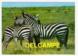 DF / ANIMAUX / ZÈBRES DE L' EST AFRICAIN - Cebras