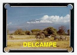 DF / ANIMAUX / ZÈBRES AU PIED DU KILIMANJARO ( KENYA ) - Cebras