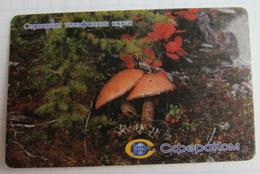 Magadan. Spherecom. Boletus Mushrooms. - Russia