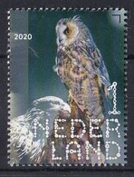 Nederland - 2 Januari 2020 - Beleef De Natuur - Roofvogels & Uilen - Ransuil - MNH - Eulenvögel