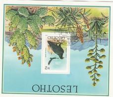 Lesotho, 1986, M2, Black Eagle, Miniature Sheet, C.t.o. MASERU -7-3-86 C.d.s., Full Gum - Lesotho (1966-...)