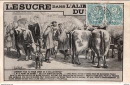 LE SUCRE DANS L'ALIMENTATION DU BETAIL VACHES BOVINS 1906 TBE - Elevage
