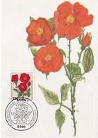 Germany 1982 Maximum Card: Flora ; Rose Roses Rosen; Art Paintings Aquarell Von Paul Seuthe: Polyantha - Hybride - Rosen