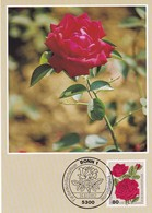 Germany 1982 Maximum Card: Flora ; Rose Roses Rosen; Bourbonrose - Rosen
