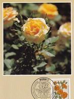 Germany 1982 Maximum Card: Flora ; Rose Roses Rosen; Floribunda - Rosen