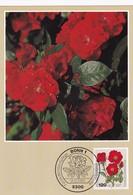 Germany 1982 Maximum Card: Flora ; Rose Roses Rosen; Polyantha - Hybride - Rosen
