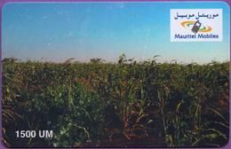 Telecarte °_ Mauritanie-1500 UM-épreuve Sans Numéro- R/V - Mauritanie