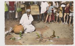 Bobo Dioulasso-charmeur De Serpents - Senegal