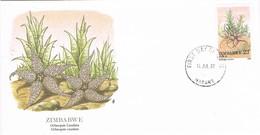 35181. Carta F.D.C. HARARE (Zimbawe) 1088. Cactus, Obeopsis Caudata. Vegetal - Cactus
